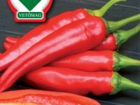 Sweet Hungarian Pepper Seeds - Palotas F1